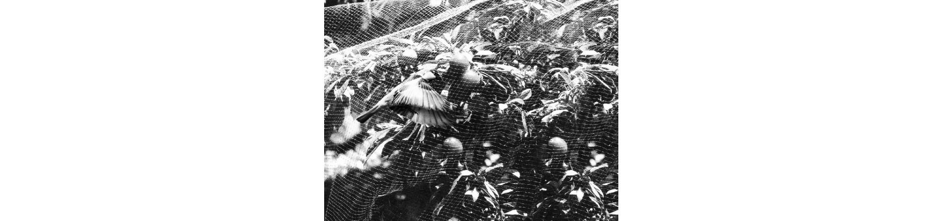 Aviarios, protección animales